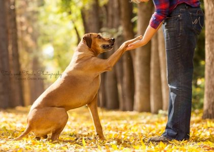 5 Tips to Reducing Conflict with your Dog