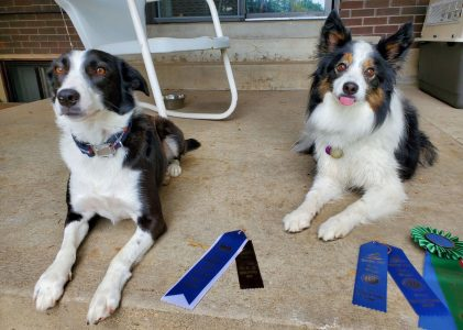 Success at the Greeley Dog Shows!