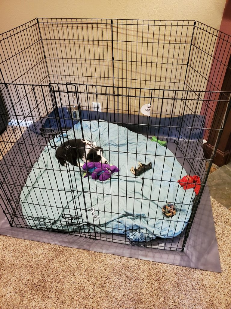 Image is of a tall exercise pen located in a living room. Inside the pen, a black and white puppy sleeps with his toys.